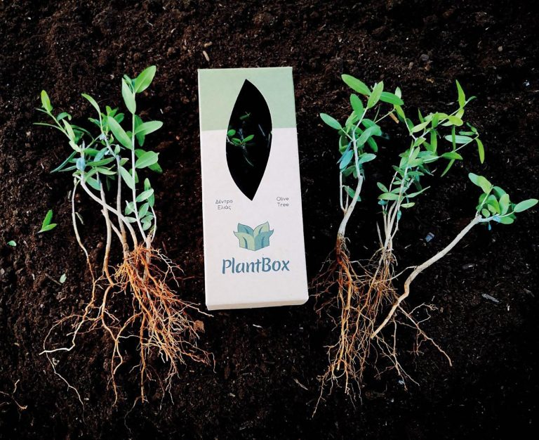 Plantbox: The olive travels the world
